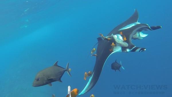 寶齊萊與非盈利組織魟魚基金會締結合作夥伴關係,攜手推動保護及研究魔鬼魚的工作,寶齊萊贊助基金會之餘並同時領養了兩條魔鬼魚。