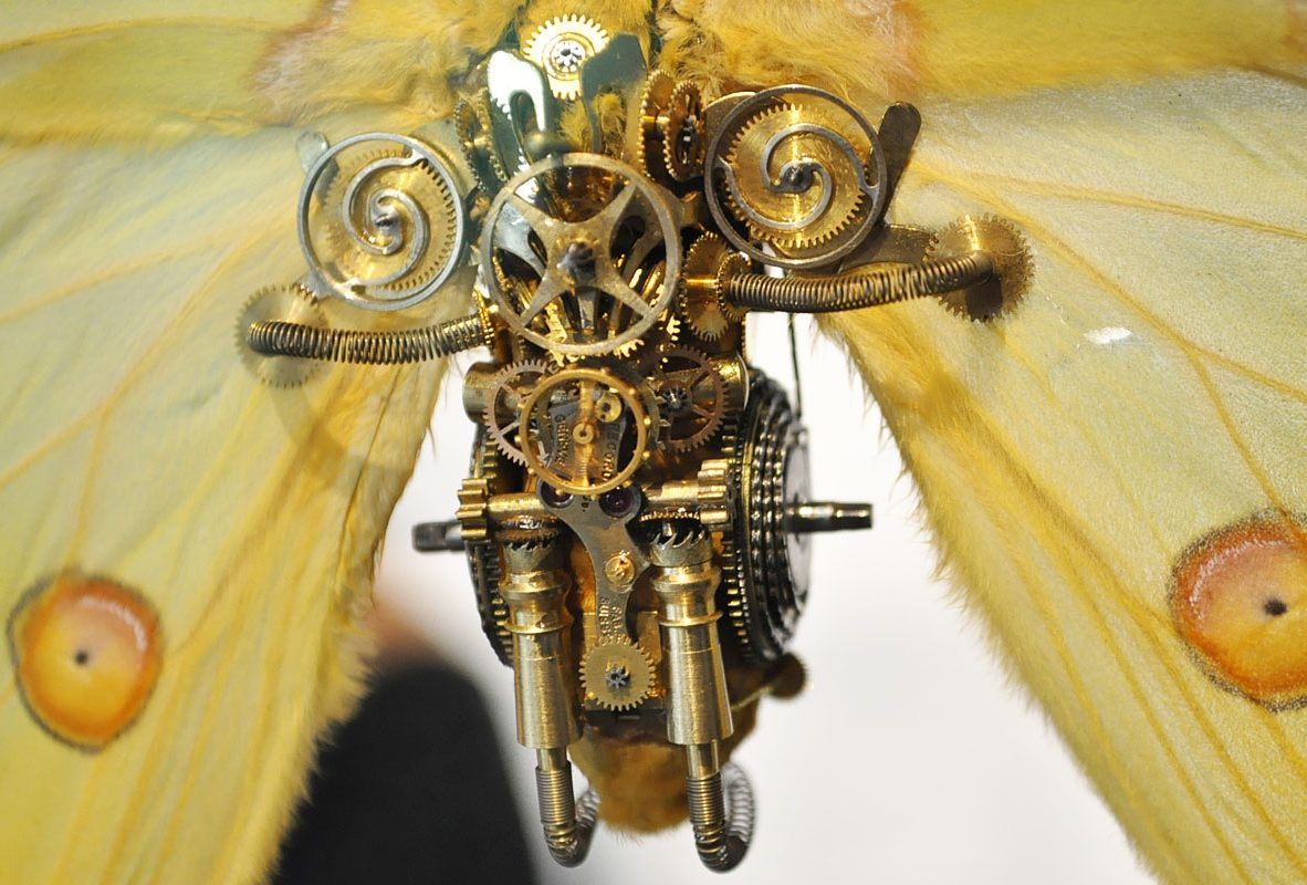 Argema(月蛾第1版本)身上的芝麻鍊。