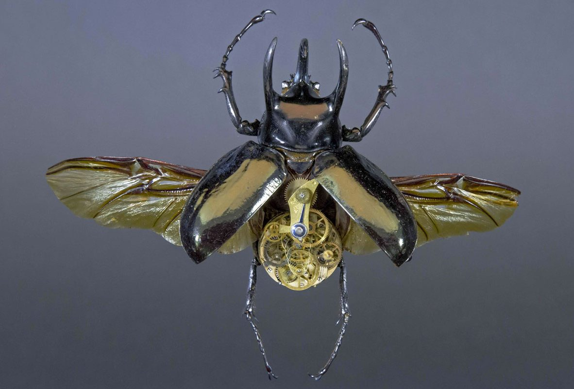 Chalcosoma Atlas Tertius(南洋大兜蟲第3版本),參考售價NTD 156,000。